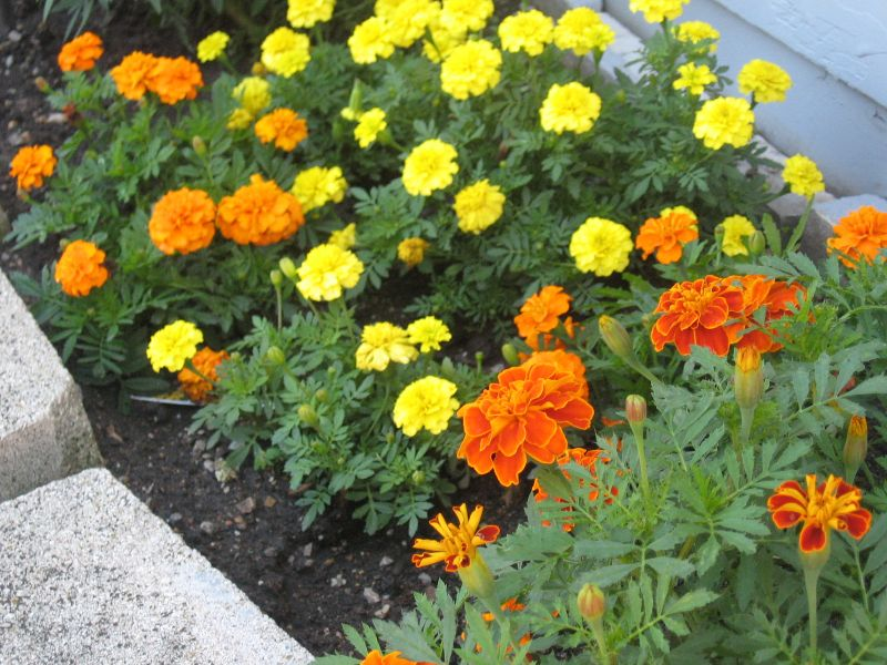 Awesome Flower Garden Ideas