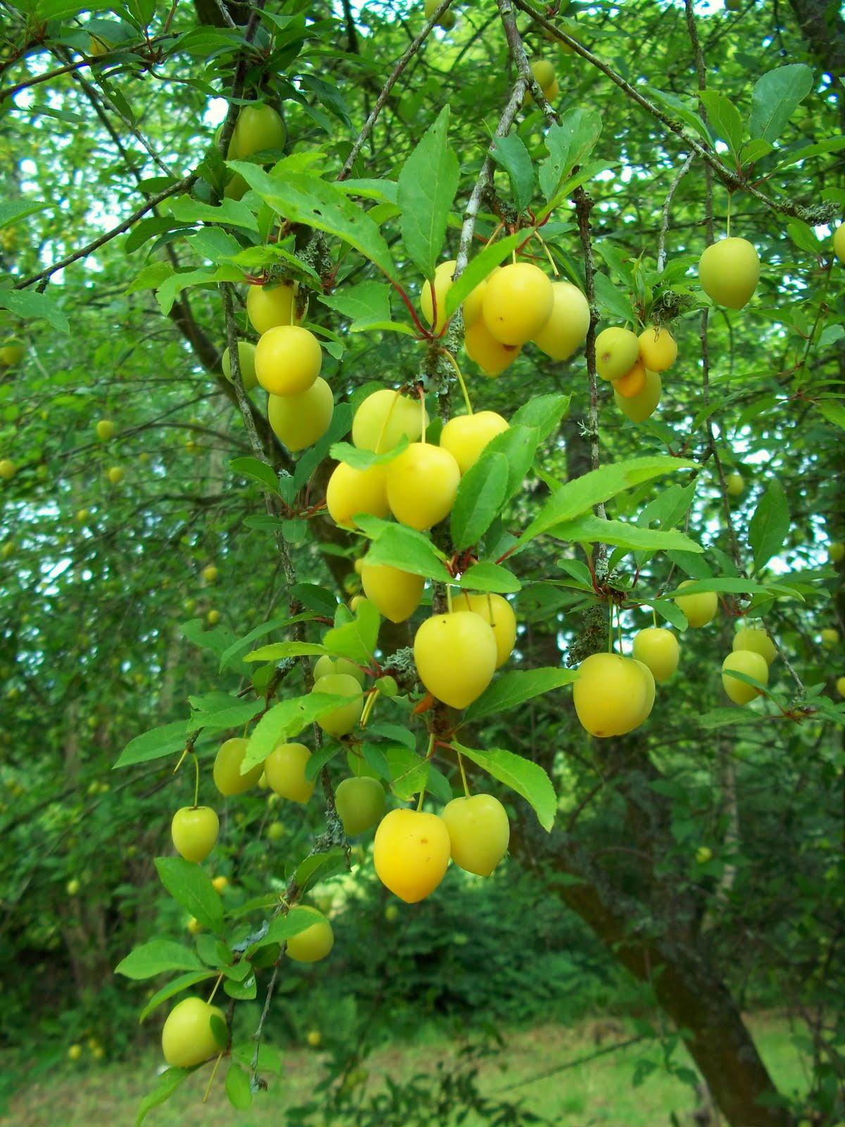 Fresh Fruit Garden