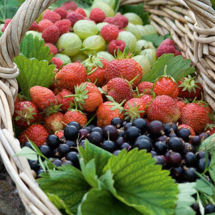 Fruit Garden Collection