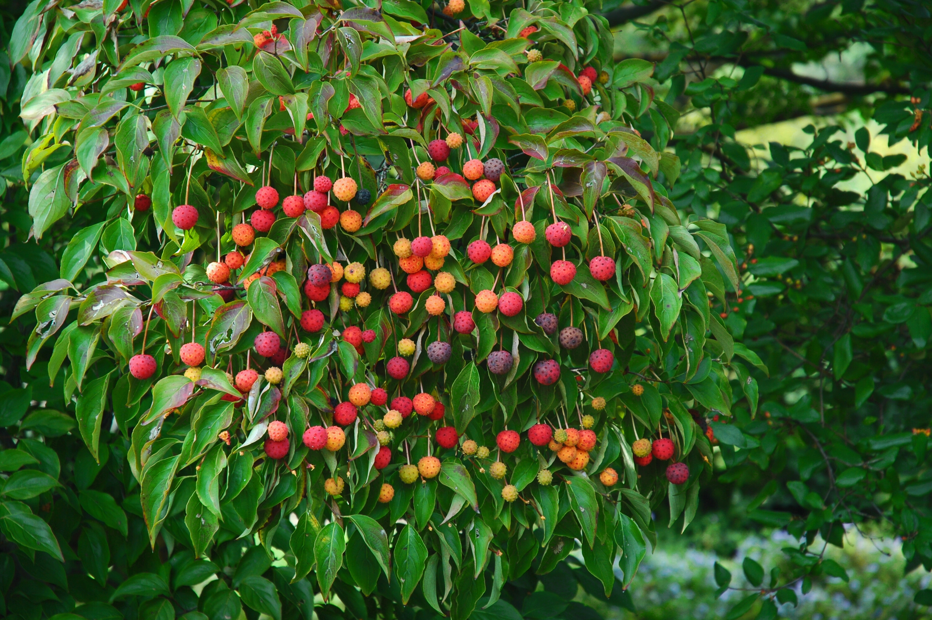 Fruit Garden Design