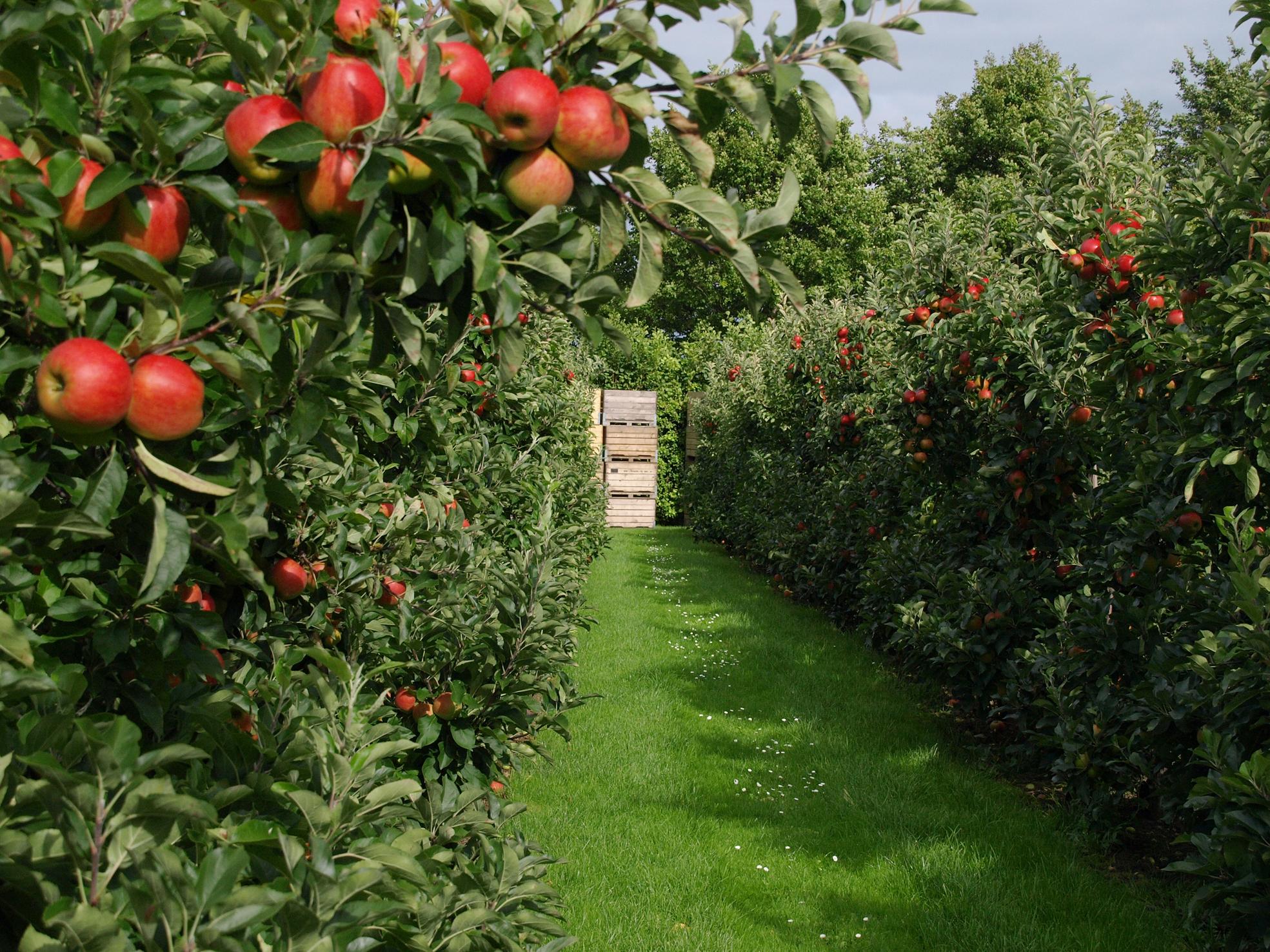 Fruit Garden In Backyard