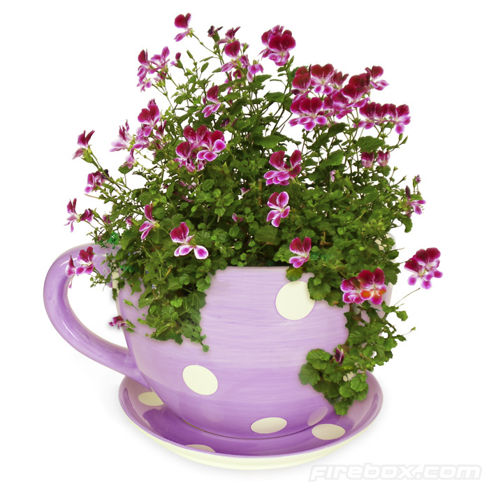 Large Flower Pots Purple