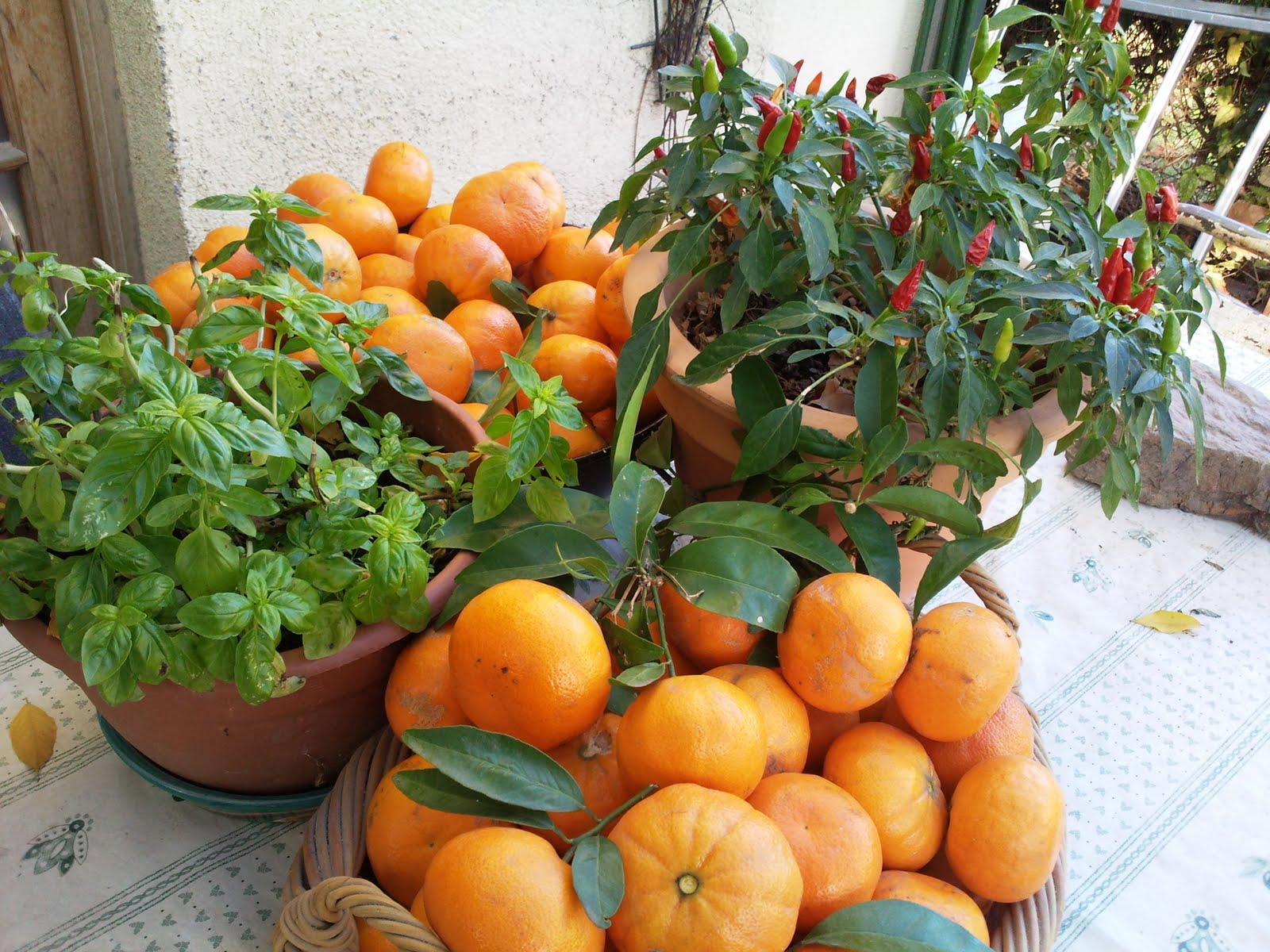 Orange Fruit Garden