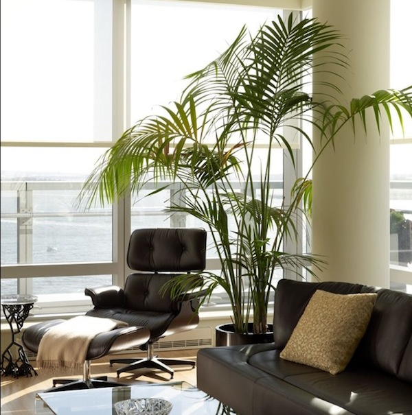 Tropical House Plants Photo