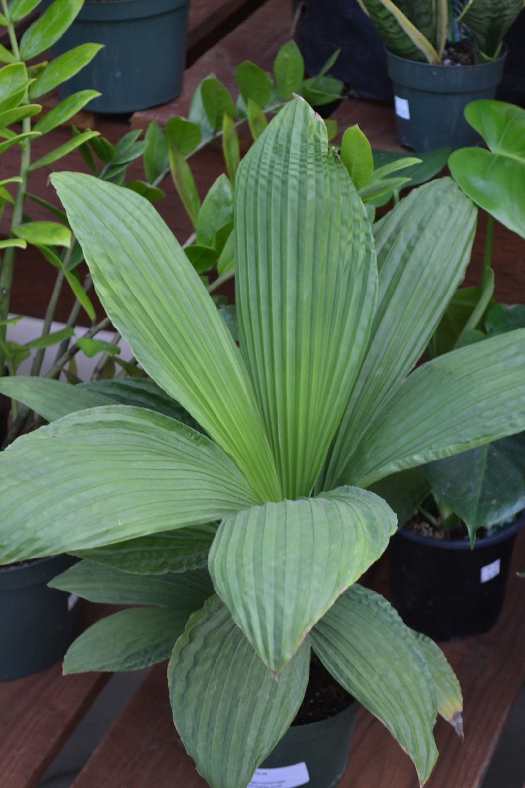 Tropical House Plants Variety