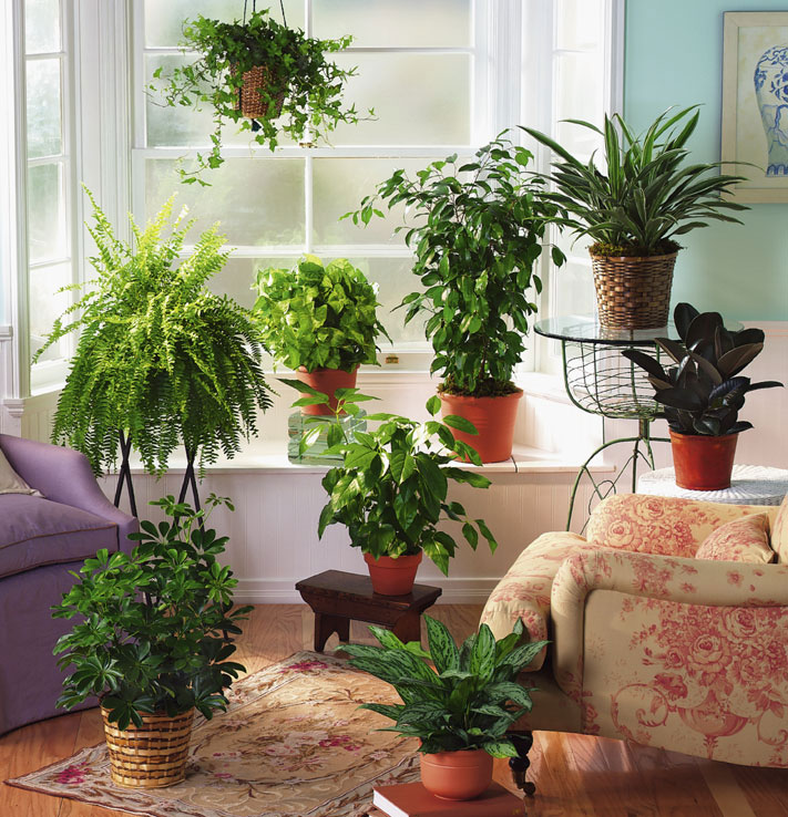Tropical House Plants For Garden Room