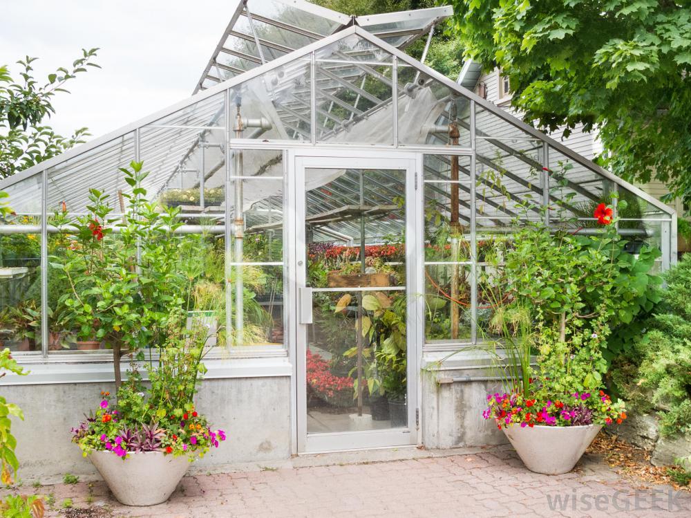 Backyard Greenhouse For Beginners