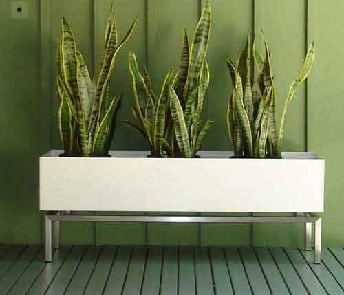 Contemporary Wood Planter Box