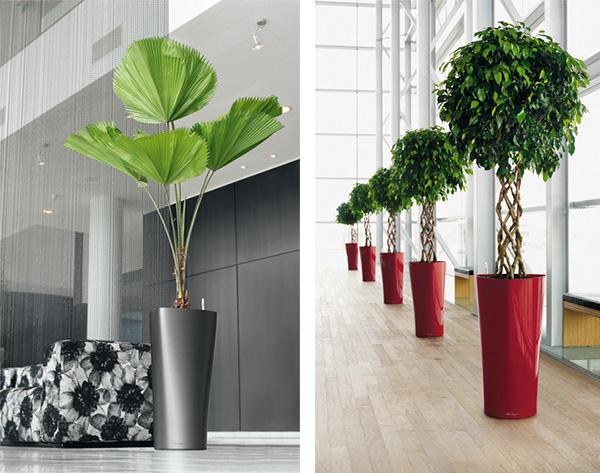 Design Elegant Modern Planters  Image