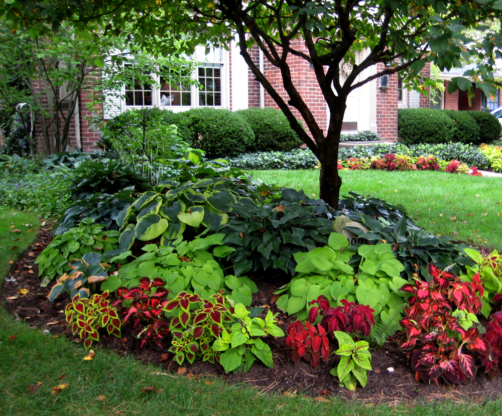 Landscape Ideas For Front Yard Picture