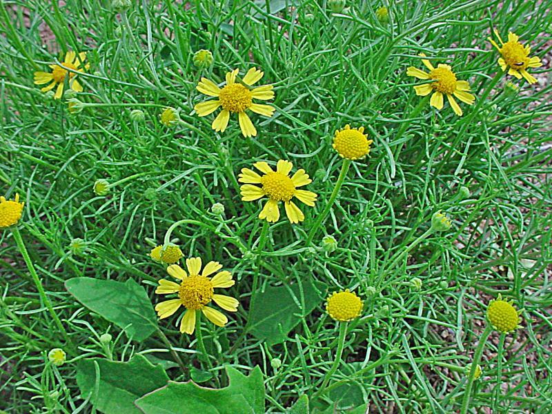Austin Xeriscape Plants