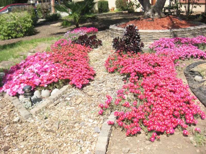 Xeriscape Ideas Fronthouse