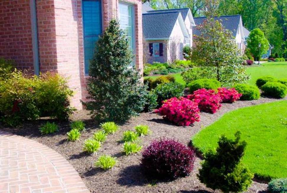 Front Yards Landscaping Plant