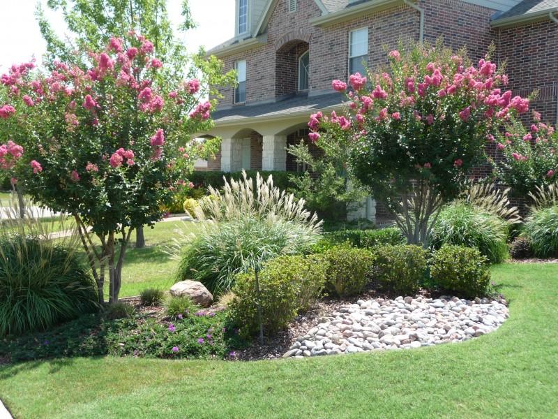 Modern Front Yard Landscaping Plants