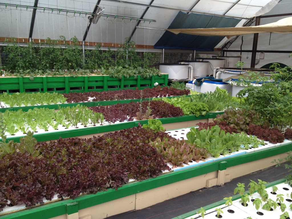 Backyard Aquaponics Ideas