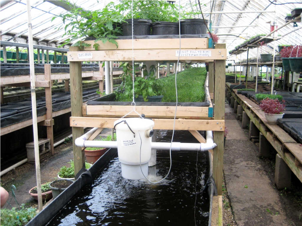 Backyard Aquaponics Images