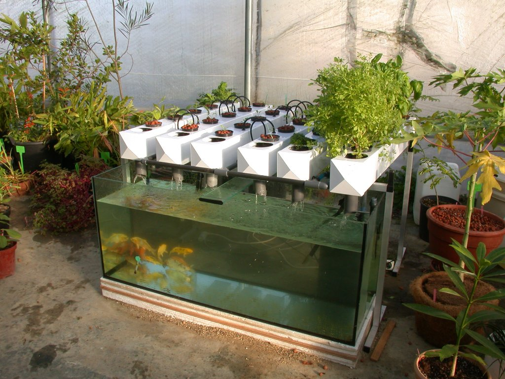 Backyard Aquaponics Kit