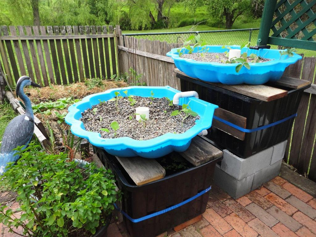 Backyard Aquaponics System