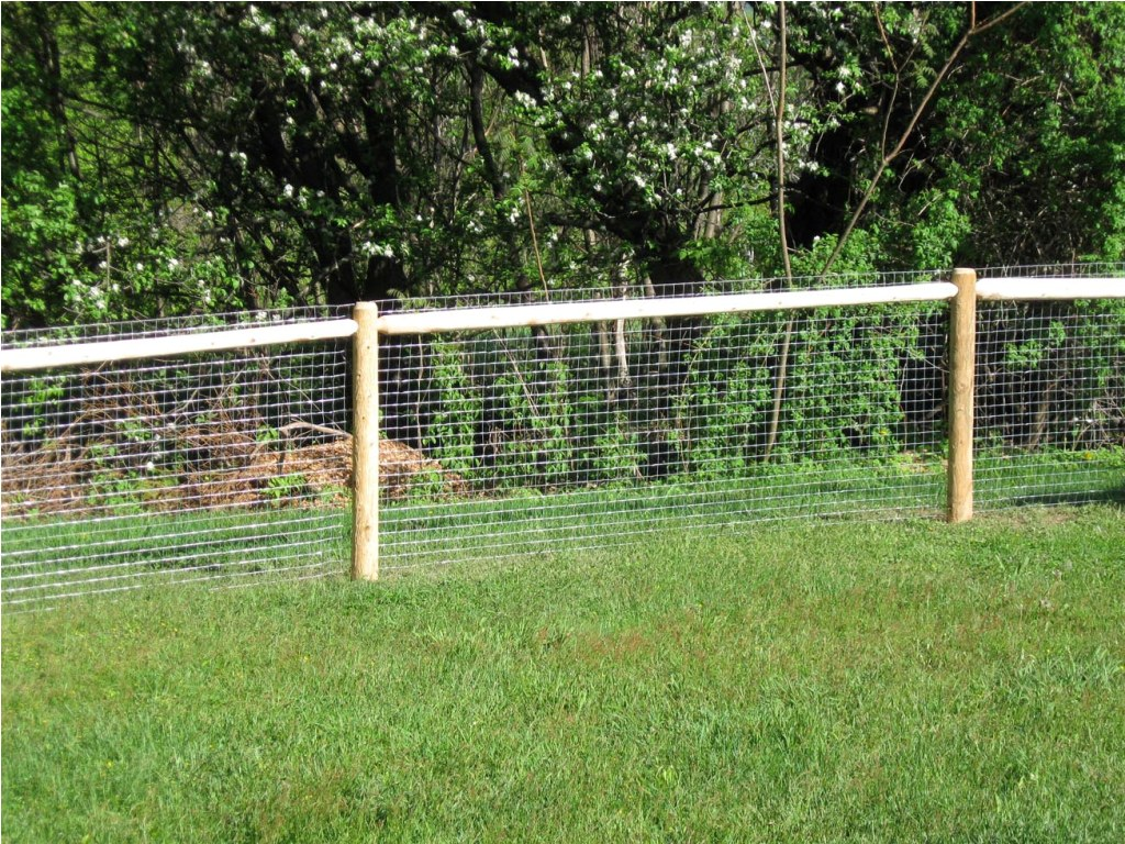 Dog Fencing Solutions